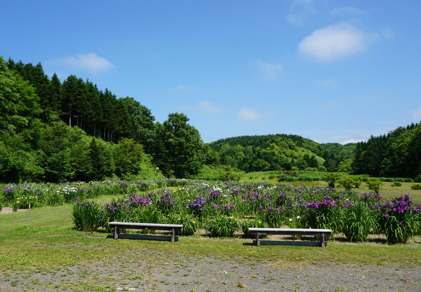 朝日公園花しょうぶ園キャンプ場03