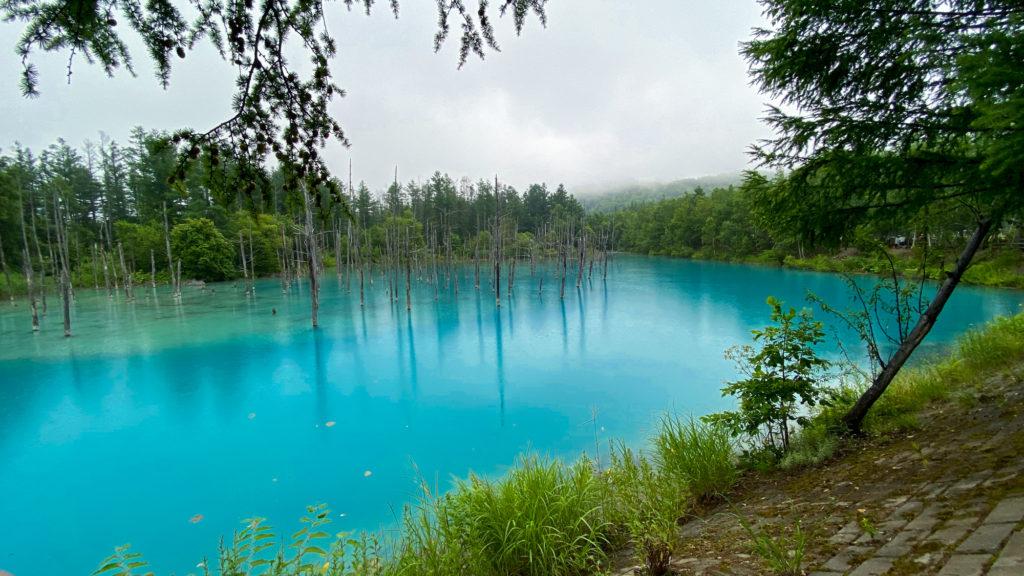 美瑛町 白金 青い池 立ち枯れの木