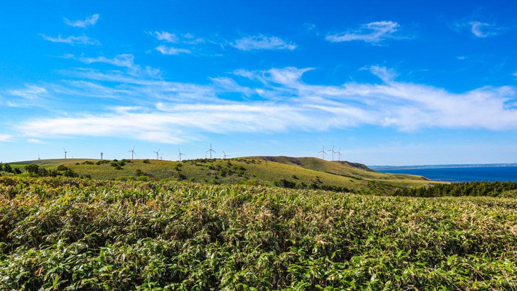 稚内白い道シェルロード宗谷丘陵と風車