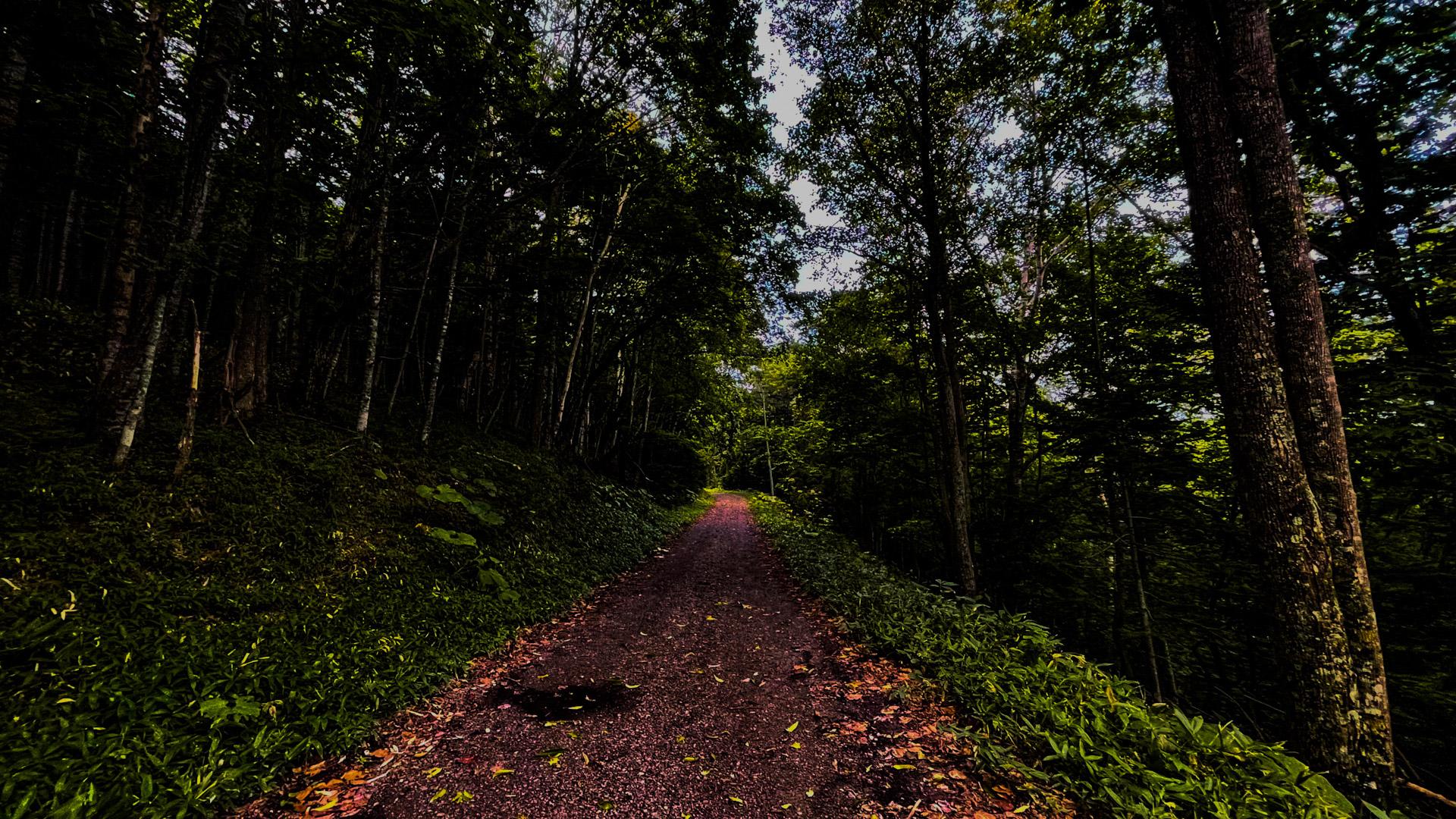 タウシュベツ川橋梁までの林道